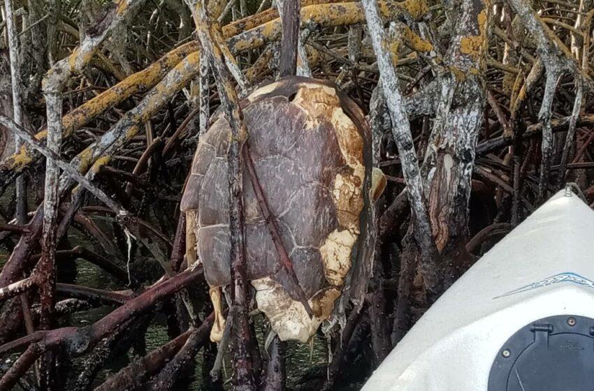 Desconocidos Vierten Aceite Quemado Bahía Luperón; Matan Diversas Especies, Decenas Crustaceos